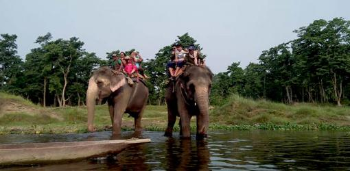 Elephant Safari at Chitwan