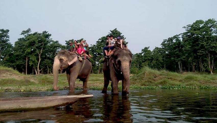 Elephant Safari at Chitwan